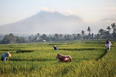 水稻田 – 联合国教科文组织世界遗产中心 – 巴图卡鲁山脉